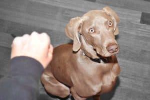 Így tanítsd meg pár nap alatt a kutyádat a kézjelekre