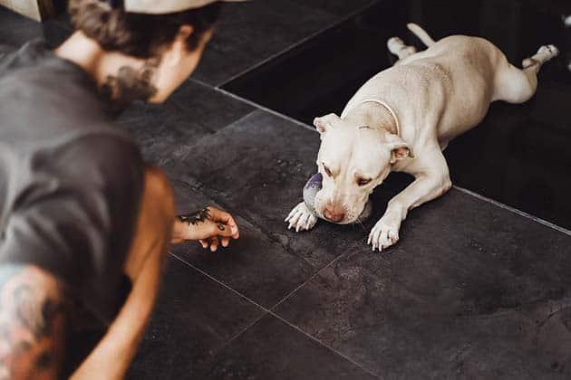 Így éred el a profi kutyaoktatók eredményeit otthon